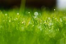 Gras 13 von bilderreich