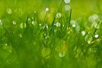 Gras 5 von bilderreich