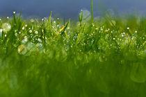 Gras 12 von bilderreich