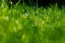 Gras 11 von bilderreich