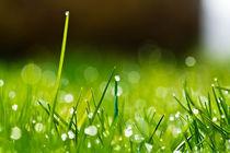 Gras 10 by bilderreich