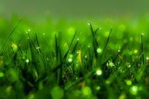 Gras 9 von bilderreich