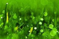 Gras 8 von bilderreich