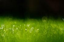 Gras 1 von bilderreich