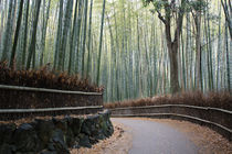 Arashiyama, bamboo forest von Bianca Valentina Pistillo