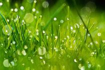 Gras 7 von bilderreich