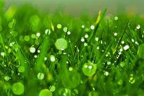 Gras 6 von bilderreich