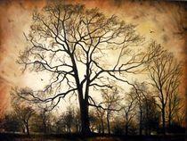 Late Autumn / Spätherbst von Apostolescu  Sorin