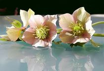 Blütenzauber by Ingrid Clement-Grimmer