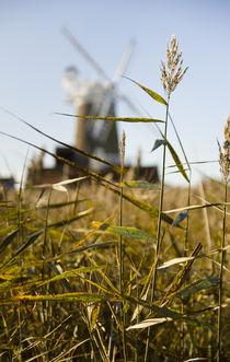 Wheat in Norfolk by tgigreeny