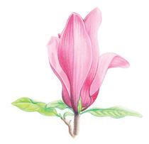 Only a Flower von Bianca Valentina Pistillo