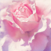 Rosa by AD DESIGN Photo + PhotoArt