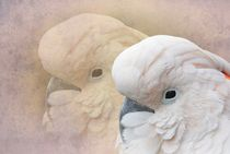 Kakadu von Elke Balzen