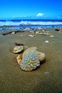 Seashells in St. Croix von Julie Hewitt