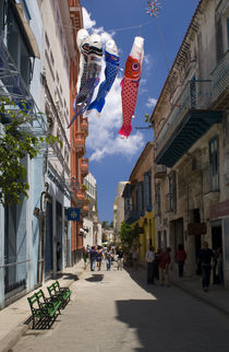 Havana Fish Kites by tgigreeny