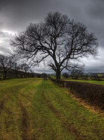 Dales Tree by tgigreeny