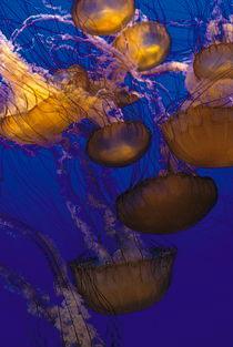 Jellyfish von Julie Hewitt