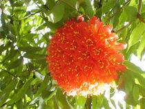 Red beauty von reorom