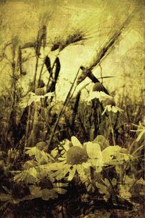 Vintage-Kamille von Mathias May