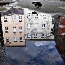 Katze im Berliner Hinterhof by captainsilva