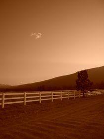 Lonesome cloud. von Sally Nelsen