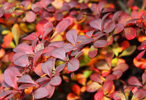 Autumn Picture by Milena Ilieva