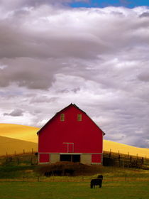 Farm life. by Sally Nelsen
