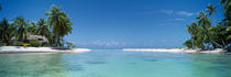 Palm trees on the beach, Tikehau, French Polynesia by Panoramic Images