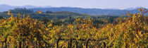 High Angle View Of A Field, Alexander Valley, Napa, California, USA by Panoramic Images