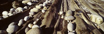 Close-up of stones, Pemaquid, Massachusetts, USA by Panoramic Images