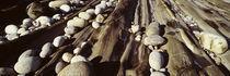 Close-up of stones, Pemaquid, Massachusetts, USA von Panoramic Images