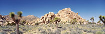 Joshua Tree National Monument, California, USA by Panoramic Images