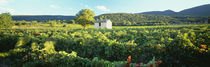 Vineyard Provence France von Panoramic Images