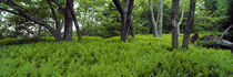 Trees in a forest, North Carolina, USA von Panoramic Images