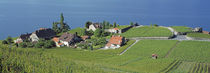 Aerial View Of Vineyards By A Lake, Lake Geneva, Vaud, Switzerland by Panoramic Images
