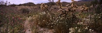 San Bernardino County, California, USA von Panoramic Images