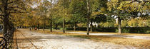 Autumnal trees in a park, Hofgarten, Munich, Bavaria, Germany by Panoramic Images