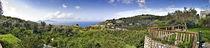 Town on a hillside, Massa Lubrense, Capri, Naples, Campania, Italy von Panoramic Images