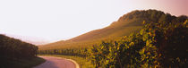 Road passing through vineyards, Weinsberg, Baden-Wurttemberg, Germany by Panoramic Images