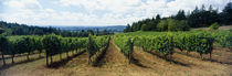 Newberg, Willamette Valley, Oregon, USA by Panoramic Images