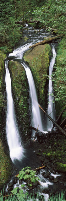 Columbia River Gorge, Oregon, USA von Panoramic Images
