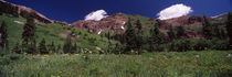 Forest, Crested Butte, Gunnison County, Colorado, USA by Panoramic Images