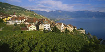 Village Rivaz between Vineyards & Mts. Lake Geneva Switzerland by Panoramic Images