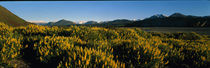 Wild Flowers New Zealand von Panoramic Images