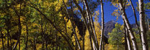 Aspen, Pitkin County, Colorado, USA by Panoramic Images