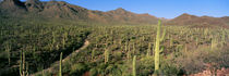Saguaro National Park, Arizona, USA von Panoramic Images
