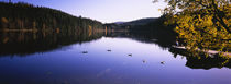 Ducks swimming in a lake, Black Forest, Baden-Wurttemberg, Germany by Panoramic Images