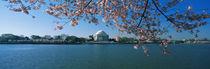 Tidal Basin Jefferson Memorial Washington DC von Panoramic Images