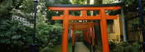 Torii Gates in a park, Ueno Park, Taito, Tokyo Prefecture, Kanto Region, Japan by Panoramic Images