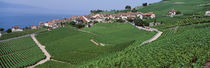 Lake Of Geneva, Vineyards, Rivaz, Switzerland by Panoramic Images